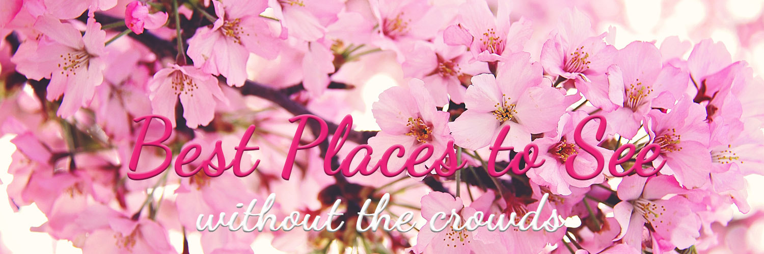 Best places to see the Cherry Blossoms and avoid the crowds